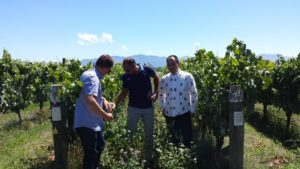 Brandon, Puneet and Takkaki amongst the vines in Folium's Brancott valley vineyard