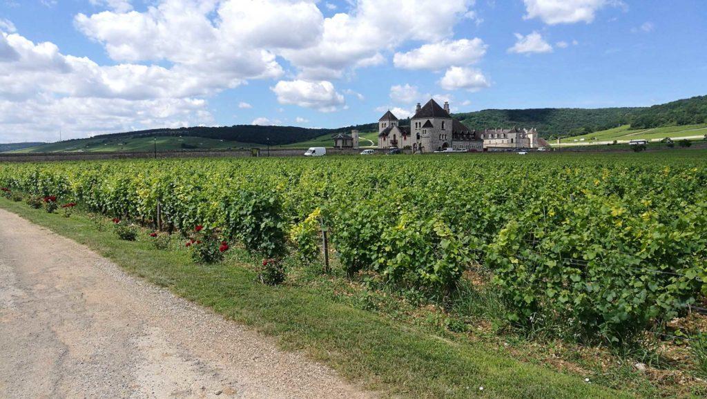 Domaine Bertagna vineyard