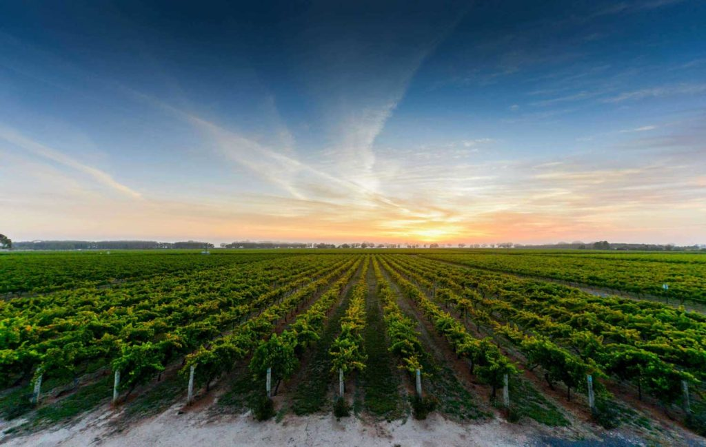 The Zema vineyard, Coonawarra Australia