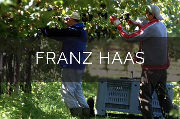 Franz Haas winery