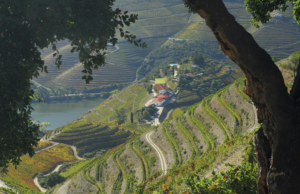 QdC vineyard