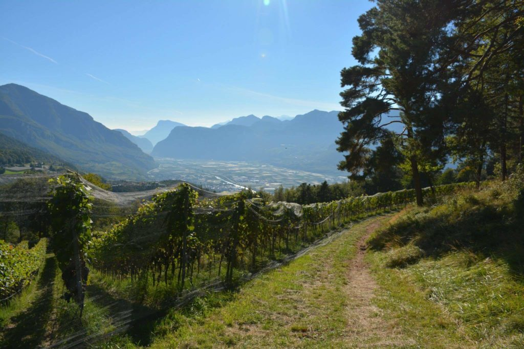 Franz Haas vineyards in Alto Adige Italy