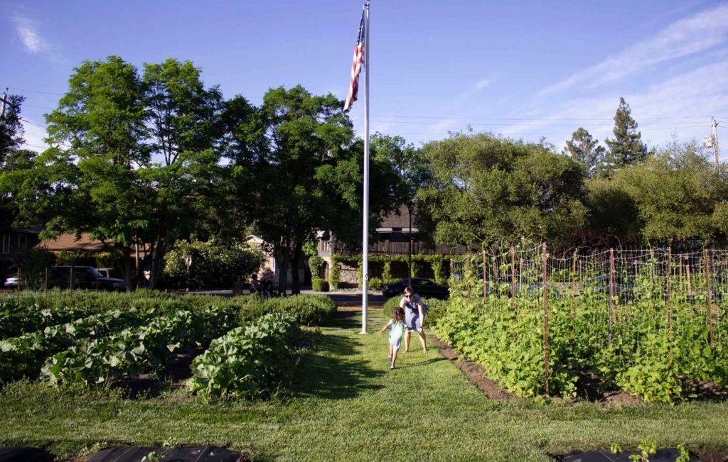 Yountville vineyards in Napa Valley