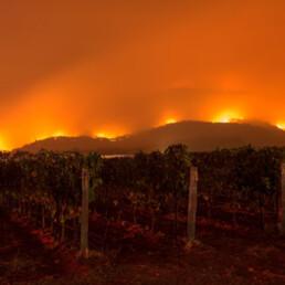 Fires burning in vineyard