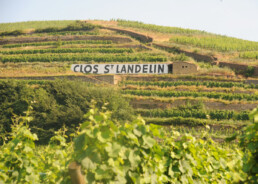 Clos Saint Landelin sign in vineyard