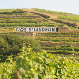 Clos Saint Landelin sign in vineyard