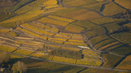 Aerial view of vineyard