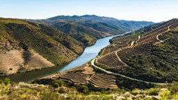 Vineyards by the River Douro, Portugal