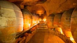 Amphorae wine aging in cellar