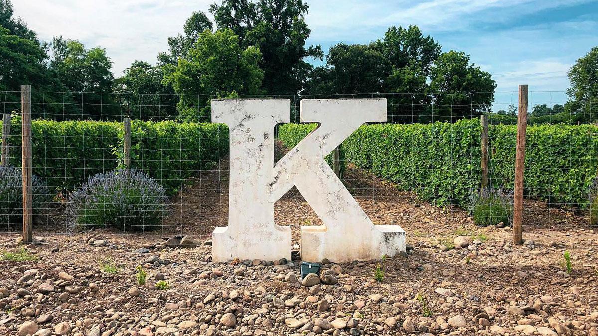 Big K in K Vintners' vineyard