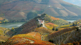 View over the mountainous vineyards of the Douro, Portugal