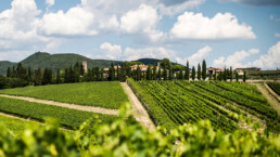 Photo overlooking vineyard